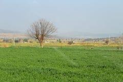 Een mening van plattelandsbomen in het midden van gebieden royalty-vrije stock foto