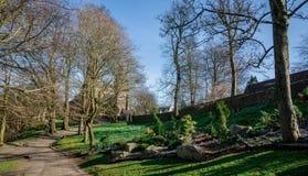 Een mening van St Machar ` s Kathedraal door bomen in Seaton Park, Aberdeen Royalty-vrije Stock Afbeeldingen