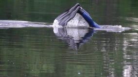 Een mens in blauwe aqualong ligt in het water en duikt dan stock videobeelden
