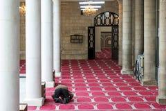 Een mens die in Al Husseini Mosque in Amman, Jordanië bidden Stock Foto's