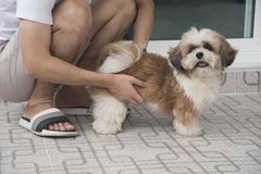 Een mens die een hond houden Stock Afbeelding