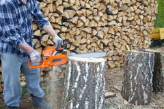 Een mens die een kettingzaag werken r Berkbrandhout stock fotografie