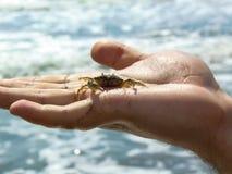 Een mens die een krab in zijn hand houden stock foto's