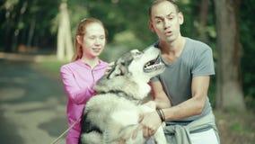 Een mens die in park een hond strijken stock video
