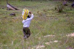 Een mens die een zak van uien draagt stock afbeeldingen