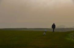 Het lopen van de honden Stock Foto's