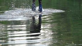 Een mens duikt in de rivier stock videobeelden
