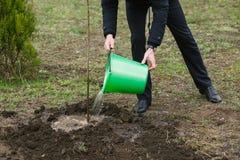 Een mens geeft een onlangs geplante boom water royalty-vrije stock foto's