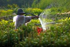 Een mens het water geven bloemtuin Stock Afbeeldingen