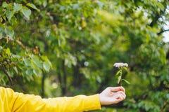 Een mens houdt een bloem tegen de vage achtergrond van bomen en gras bokeh, close-up, picknick, de zomer stock afbeelding