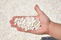 Een mens houdt handvol overzeese shells, Shell Beach, Westelijk Australië Stock Foto
