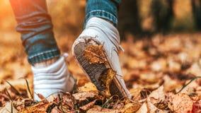 Een mens houdt op lopend Het meisjes` s meisje ` s Hete meisjes op de aard in het park onder de bladeren van geel De herfst Stock Foto's