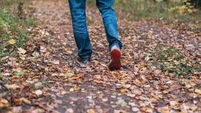 Een mens houdt op lopend Het meisjes` s meisje ` s Hete meisjes op de aard in het park onder de bladeren van geel De herfst Royalty-vrije Stock Afbeelding
