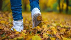 Een mens houdt op lopend Het meisjes` s meisje ` s Hete meisjes op de aard in het park onder de bladeren van geel De herfst Royalty-vrije Stock Afbeeldingen