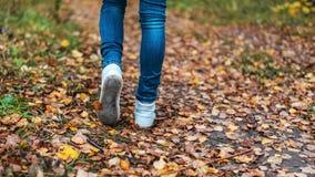 Een mens houdt op lopend Het meisjes` s meisje ` s Hete meisjes op de aard in het park onder de bladeren van geel De herfst Stock Foto