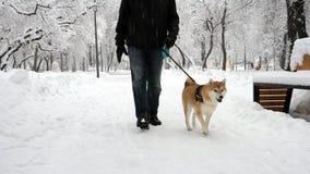 Een mens loopt met een grappige hond in een sneeuwpark De hond glimlacht, likt, loopt grappig stock videobeelden