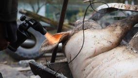 Een mens maakt een geslacht varken van haar met een soldeerlamp schoon, voorbereidingen treffend voor het fris worden stock footage