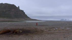 Een mens met een camera in zijn hand gaat tussen pinguïnen en verbindingen Andreev stock video