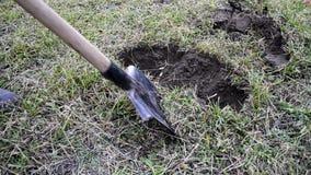 Een mens met een schop graaft een gat in de grond, verwijderend de graslaag Het graven van de aarde met een schop stock video