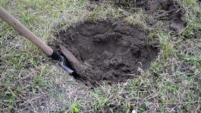 Een mens met een schop graaft een gat in de grond, verwijderend de graslaag Het graven van de aarde met een schop stock videobeelden