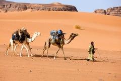 Een mens met twee kamelen, Libië royalty-vrije stock fotografie