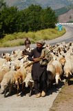Een mens met zijn geit en sheeps op de manier aan Babusar-Pas, Pakis Stock Foto