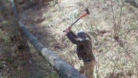 Een mens snijdt met een bijl een oude boom stock videobeelden