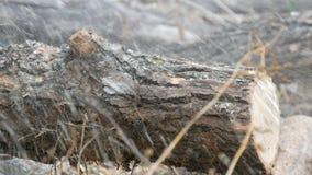Een mens snijdt overal droge boomboomstammen met kettingzaag, zaagselvlieg stock footage
