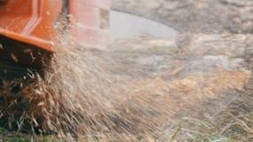 Een mens snijdt overal droge boomboomstammen met rode kettingzaag, zaagselvlieg stock footage