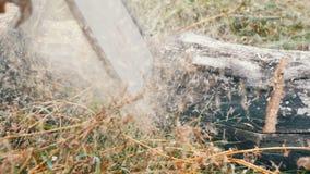 Een mens snijdt overal droge boomboomstammen met rode kettingzaag, zaagselvlieg stock videobeelden