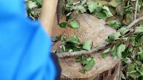 Een mens snijdt takken met een bijl, het werk bij dacha, close-up, het snijden van takken, handarbeid, staal stock video
