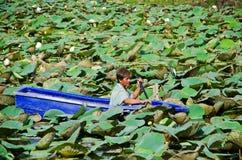 Een mens stucking in het midden van lotusbloemvijver Royalty-vrije Stock Afbeelding