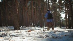 Een mens is een toerist in een pijnboombos met een rugzak Een jonge reiziger in een stijging in de winter De activiteit van de de stock footage