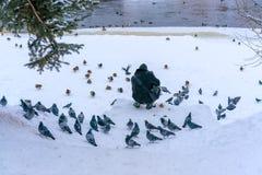 Een mens voedt duiven en eenden op de bevroren rivierbank in een kleine oude stad in de winter royalty-vrije stock afbeelding