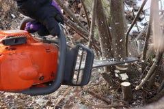 Een mens zaagt een boom met een oranje kettingzaag om de oude overwoekerde omheining schoon te maken stock afbeelding