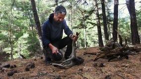 Een mens zaagt een boom voor brandhout met een handzaag stock videobeelden