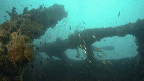 Een mens zwemt over het traliewerk van een schipbreuk stock footage