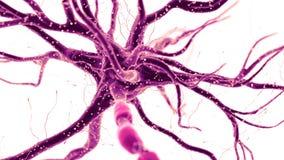 Een menselijke zenuwcel vector illustratie
