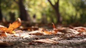 Een mensenjogging, die in park lopen. Langzame Motie stock videobeelden