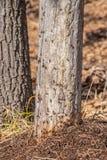 Een mierenhoop in het de lentebos, mieren werkt als groep stock foto's