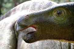Een milde, herbivoor dinosaurus in het bos royalty-vrije stock afbeelding