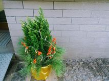 Een miniatuurkerstmisboom voor een huis stock afbeeldingen
