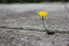 Een minimalistic beeld van een wilde bloem royalty-vrije stock afbeelding