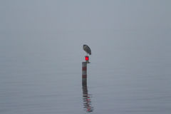 Een mistige dag op het meer Stock Afbeeldingen