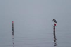 Een mistige dag op het meer Royalty-vrije Stock Afbeeldingen