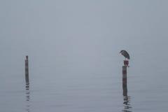 Een mistige dag op het meer Stock Foto's