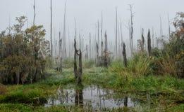 Een mistige ochtend in het Guste-Eilandmoeras met dode cipresbomen en tropische vegetatie royalty-vrije stock foto's
