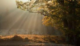 Van de de ochtendmist en zon van de herfst stralen Royalty-vrije Stock Foto