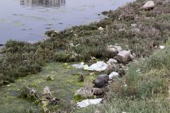 Een een een Moerasgebied, Mos en Gras stock afbeelding