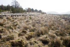 Een moerassig gebied op het Eiland van Lewis en Harris, Schotland stock fotografie